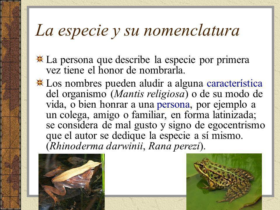 La especie y su nomenclatura La persona que describe la especie por primera vez tiene el honor de nombrarla. Los nombres pueden aludir a alguna caract