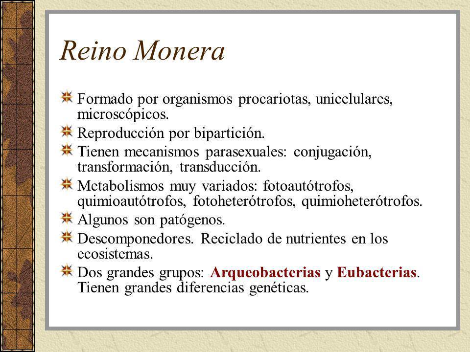 Reino Monera Formado por organismos procariotas, unicelulares, microscópicos. Reproducción por bipartición. Tienen mecanismos parasexuales: conjugació
