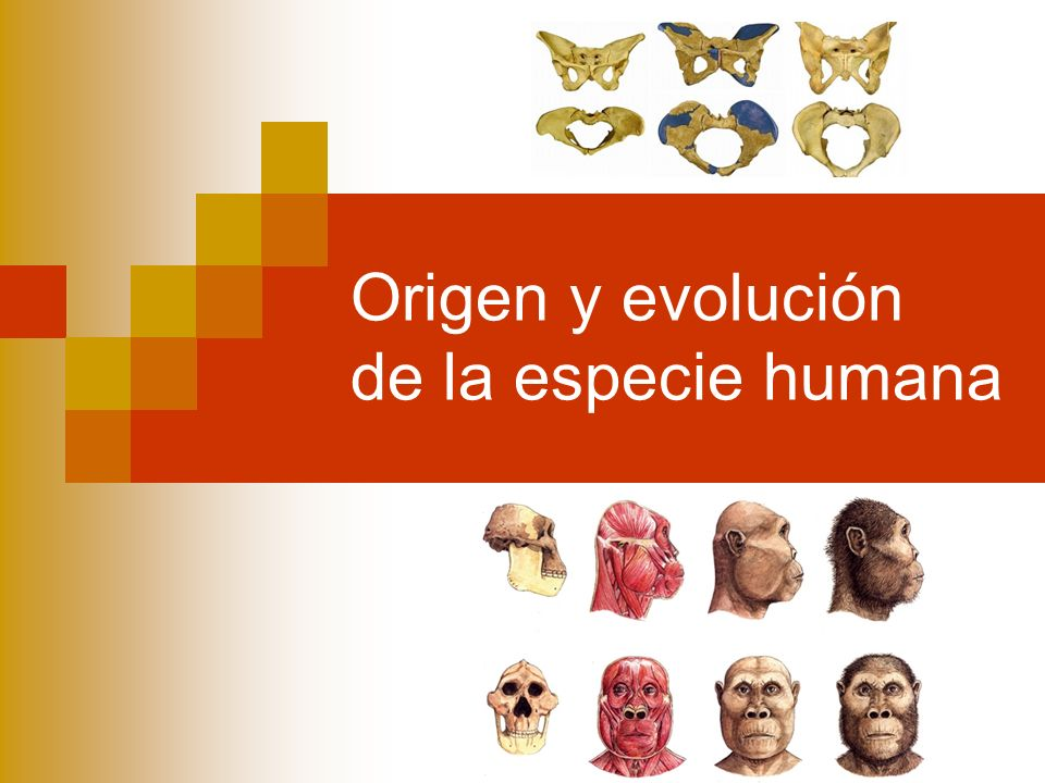 Origen y evolución de la especie humana