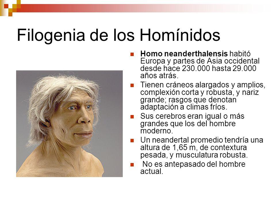 Filogenia de los Homínidos Homo neanderthalensis habitó Europa y partes de Asia occidental desde hace 230.000 hasta 29.000 años atrás. Tienen cráneos