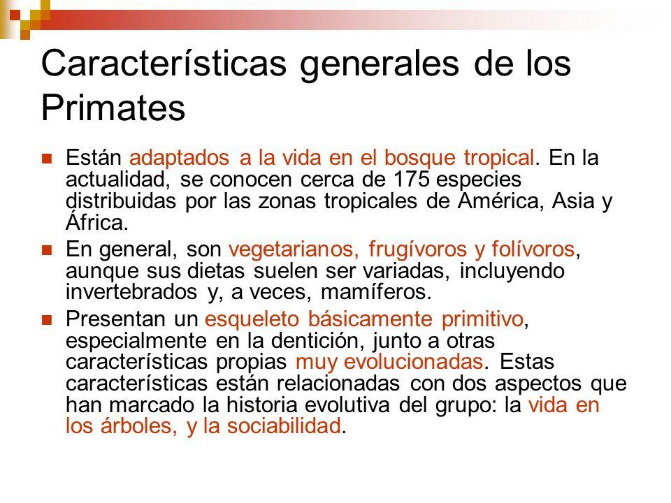Características generales de los Primates Manos y pies con cinco dedos, con muy pocas excepciones en las especies vivas.