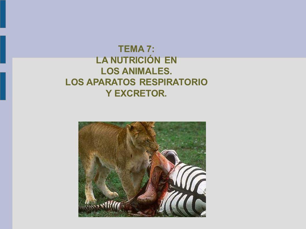 TEMA 7: LA NUTRICIÓN EN LOS ANIMALES. LOS APARATOS RESPIRATORIO Y EXCRETOR.
