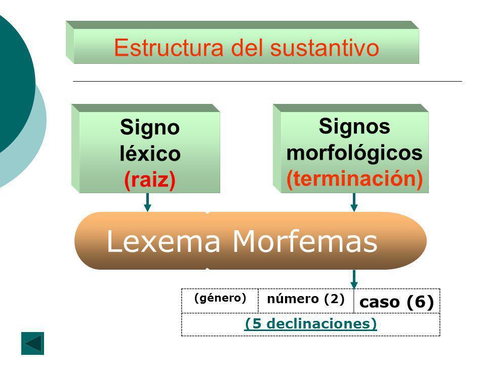 Estructura del sustantivo Signos morfológicos (terminación) Signo léxico (raiz) MorfemasLexema (género) número (2) caso (6) (5 declinaciones)