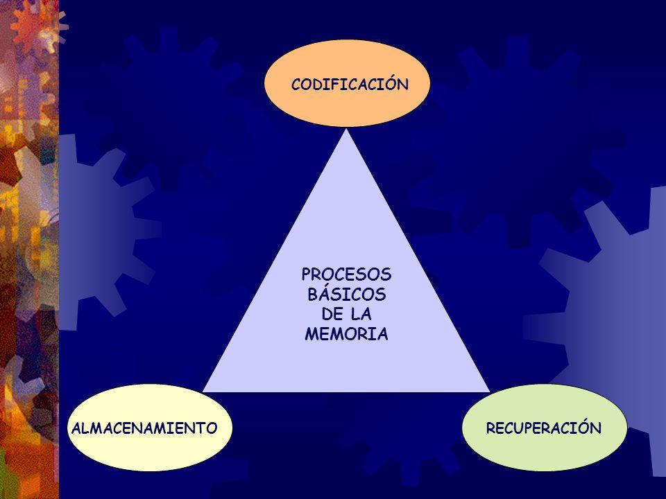 PROCESOS BÁSICOS DE LA MEMORIA CODIFICACIÓN ALMACENAMIENTORECUPERACIÓN
