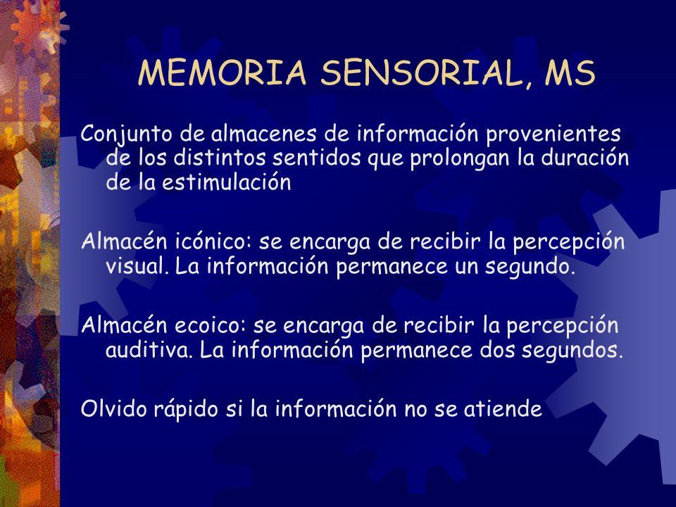 MEMORIA SENSORIAL, MS Conjunto de almacenes de información provenientes de los distintos sentidos que prolongan la duración de la estimulación Almacén