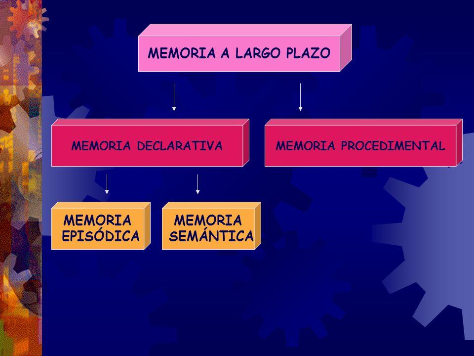 MEMORIA A LARGO PLAZO MEMORIA DECLARATIVAMEMORIA PROCEDIMENTAL MEMORIA EPISÓDICA MEMORIA SEMÁNTICA