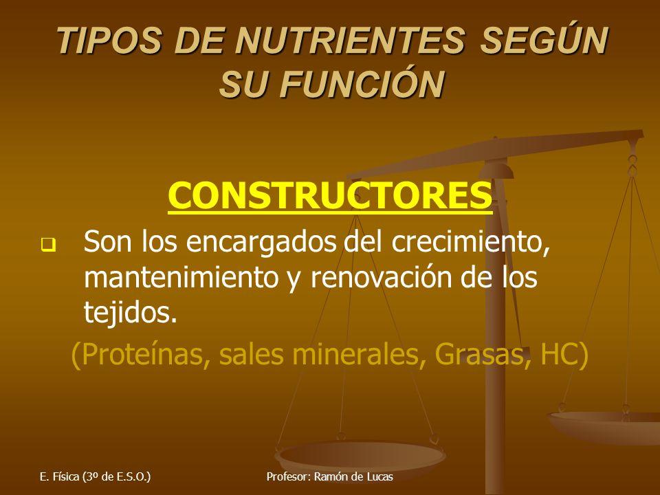 E. Física (3º de E.S.O.)Profesor: Ramón de Lucas TIPOS DE NUTRIENTES SEGÚN SU FUNCIÓN CONSTRUCTORES Son los encargados del crecimiento, mantenimiento