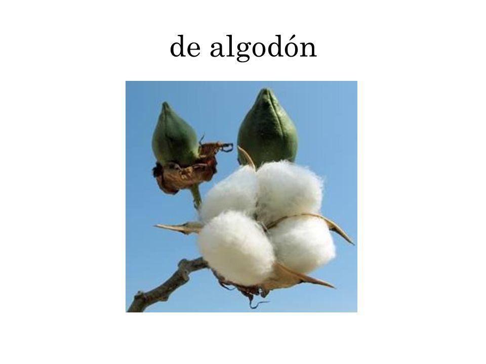 de algodón