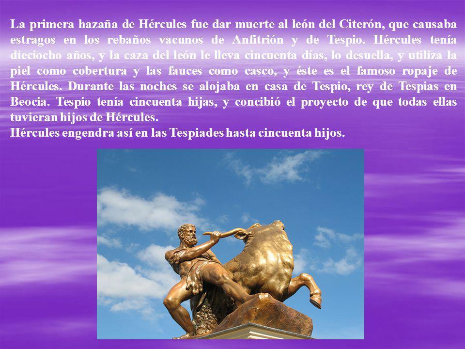 La primera hazaña de Hércules fue dar muerte al león del Citerón, que causaba estragos en los rebaños vacunos de Anfitrión y de Tespio. Hércules tenía