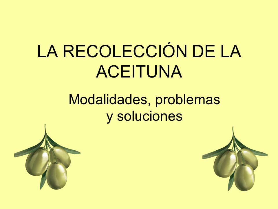 LA RECOLECCIÓN DE LA ACEITUNA Modalidades, problemas y soluciones