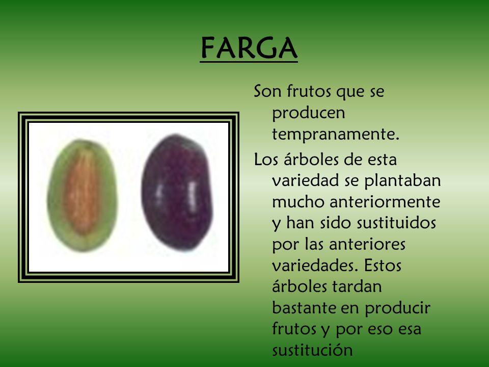 FARGA Son frutos que se producen tempranamente. Los árboles de esta variedad se plantaban mucho anteriormente y han sido sustituidos por las anteriore