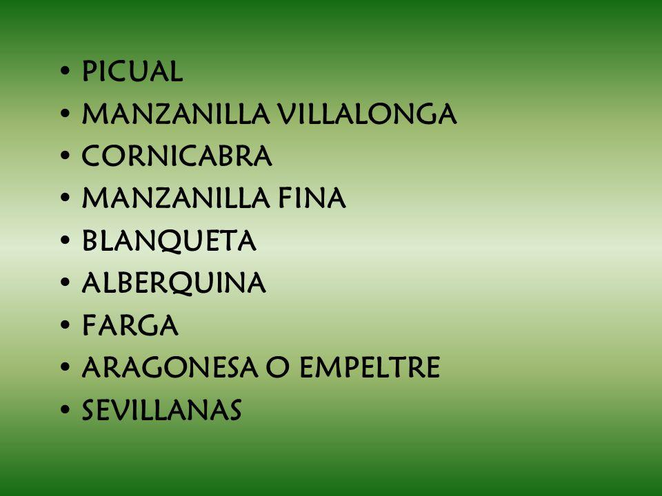PICUAL MANZANILLA VILLALONGA CORNICABRA MANZANILLA FINA BLANQUETA ALBERQUINA FARGA ARAGONESA O EMPELTRE SEVILLANAS