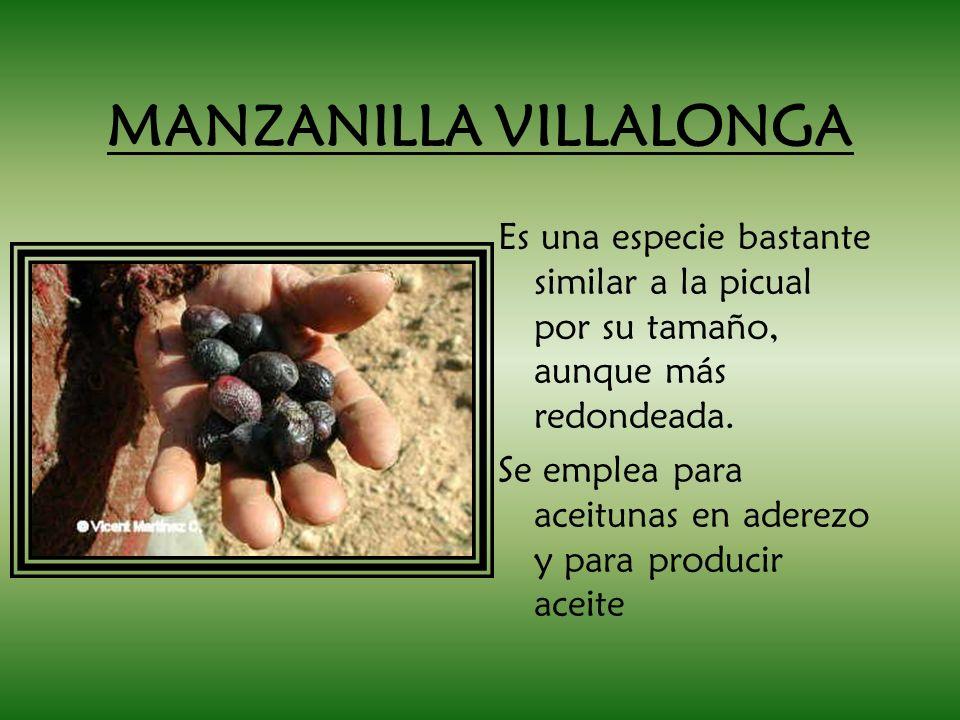 MANZANILLA VILLALONGA Es una especie bastante similar a la picual por su tamaño, aunque más redondeada. Se emplea para aceitunas en aderezo y para pro