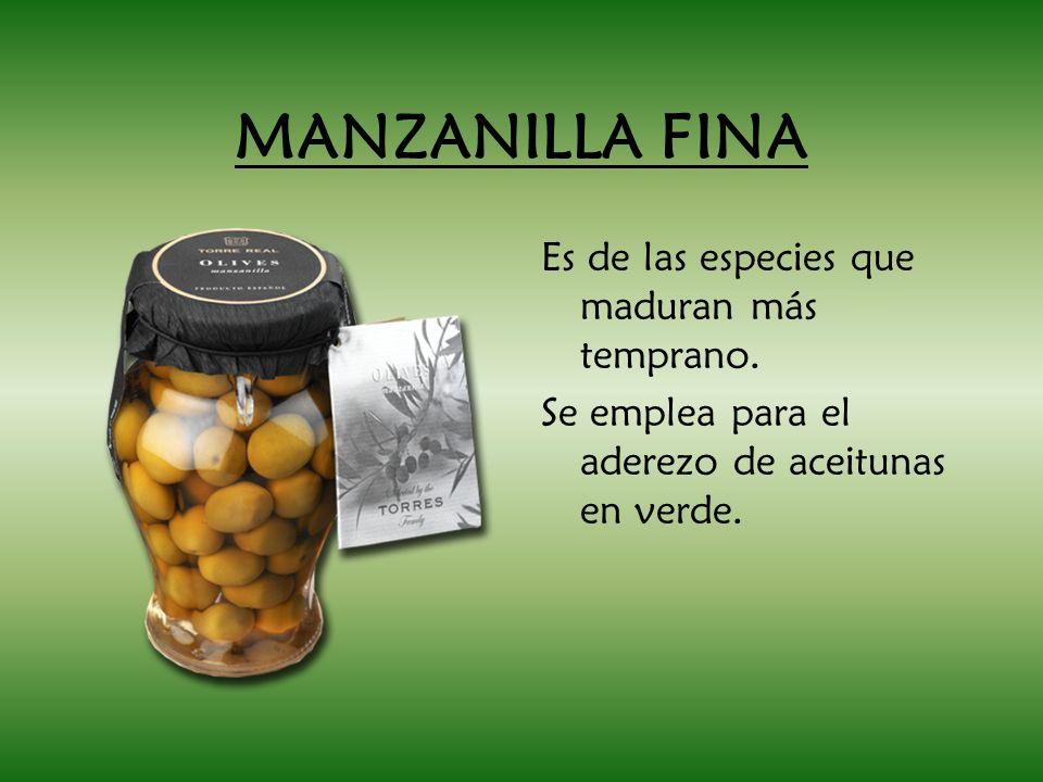 MANZANILLA FINA Es de las especies que maduran más temprano. Se emplea para el aderezo de aceitunas en verde.