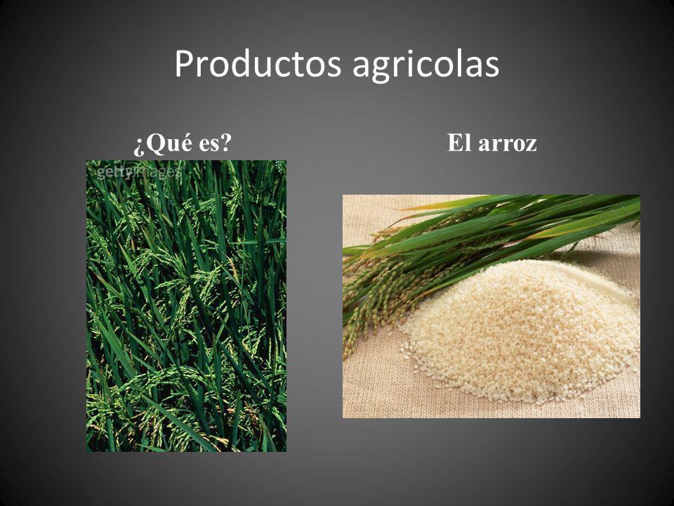 Productos agricolas ¿Qué es?El arroz