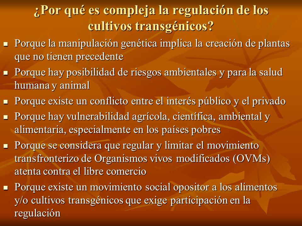 ¿Por qué es compleja la regulación de los cultivos transgénicos? Porque la manipulación genética implica la creación de plantas que no tienen preceden