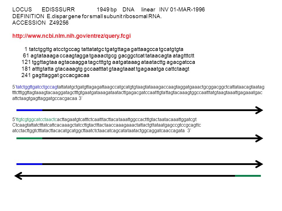 LOCUS EDISSSURR 1949 bp DNA linear INV 01-MAR-1996 DEFINITION E.dispar gene for small subunit ribosomal RNA.