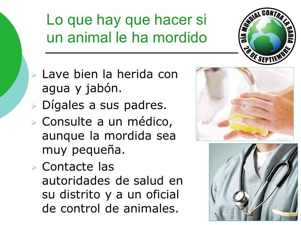 Lo que hay que hacer si un animal le ha mordido Lave bien la herida con agua y jabón. Dígales a sus padres. Consulte a un médico, aunque la mordida se