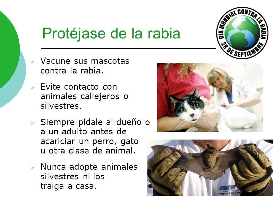 Protéjase de la rabia Vacune sus mascotas contra la rabia. Evite contacto con animales callejeros o silvestres. Siempre pídale al dueño o a un adulto