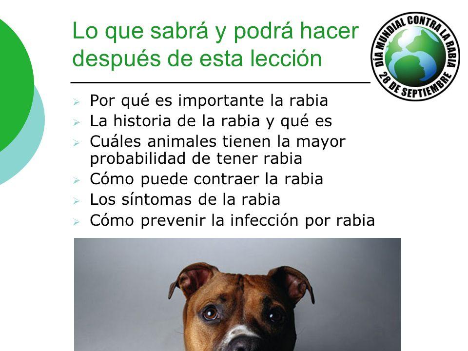 Protéjase de la rabia Vacune sus mascotas contra la rabia.