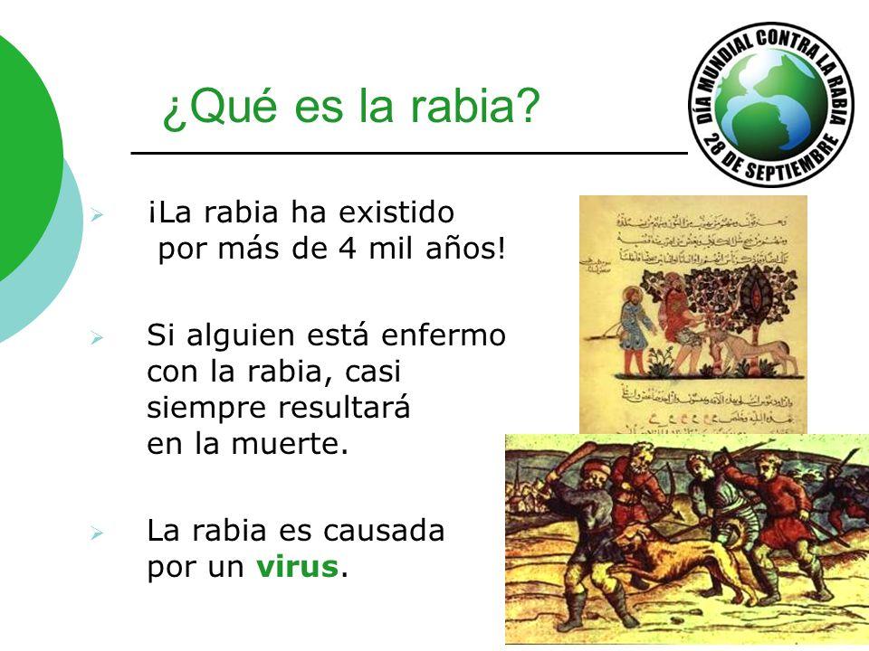 ¡La rabia ha existido por más de 4 mil años! Si alguien está enfermo con la rabia, casi siempre resultará en la muerte. La rabia es causada por un vir