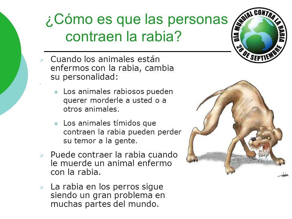 ¿Cómo es que las personas contraen la rabia? Cuando los animales están enfermos con la rabia, cambia su personalidad: Los animales rabiosos pueden que