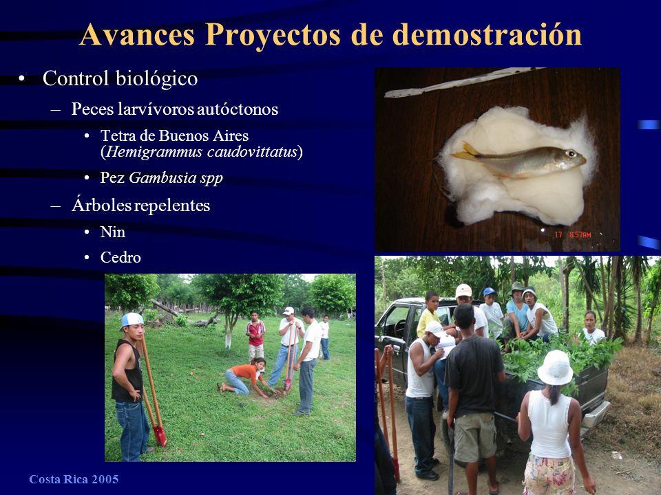 Costa Rica 2005A-16 Avances Proyectos de demostración Control biológico –Peces larvívoros autóctonos Tetra de Buenos Aires (Hemigrammus caudovittatus)