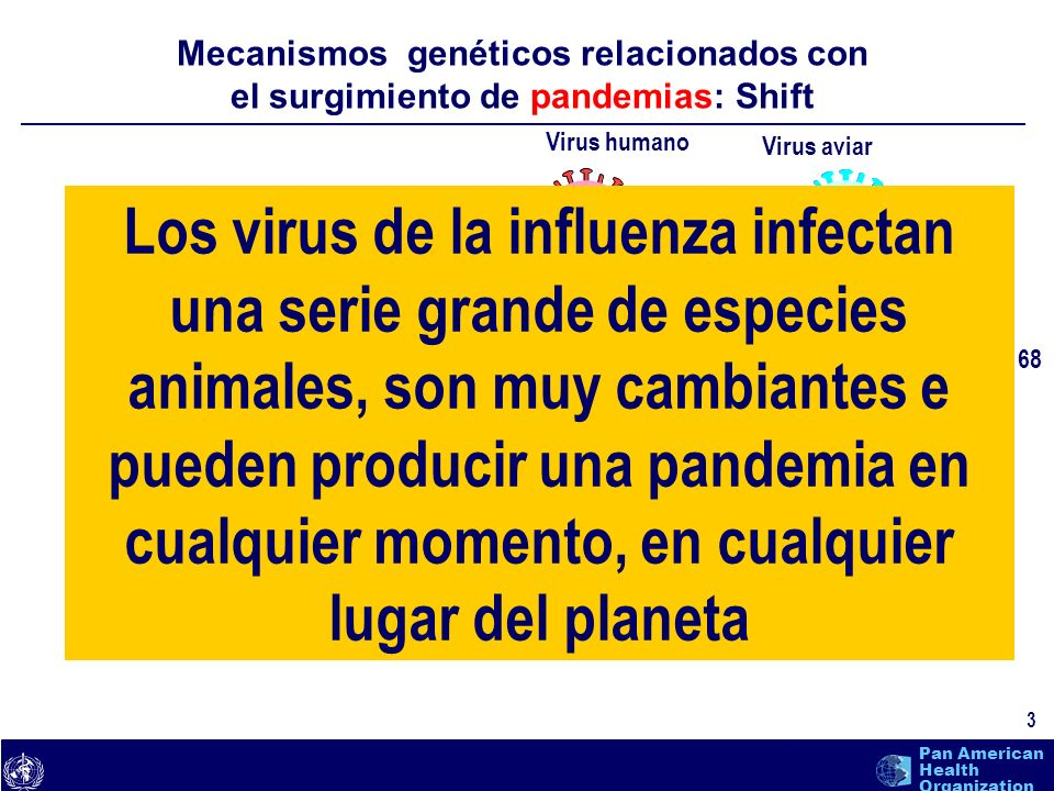 text 24 Pan American Health Organization 1.La pandemia de influenza no es lo mismo que la influenza aviar.
