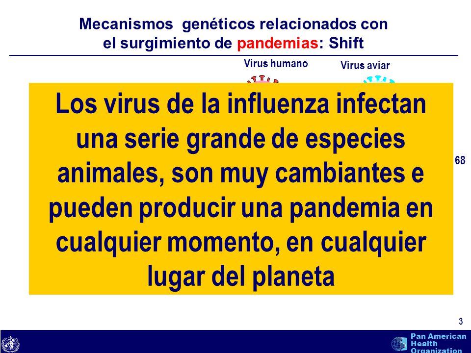 text 14 Pan American Health Organization
