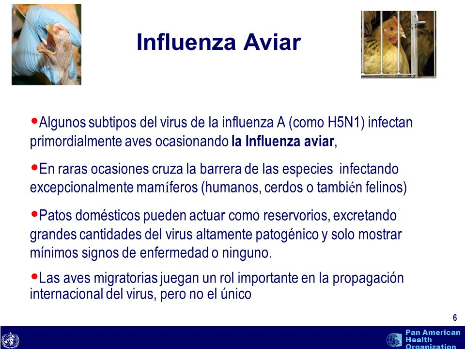 text 7 Pan American Health Organization Influenza Pandémica CondicionesH5N1 Nuevo sub-typo de la Influenza Gran proporcion de la poblacion es susceptible Infecta y causa enfermedad en humanos Transmision del virus persona- a persona es eficiente