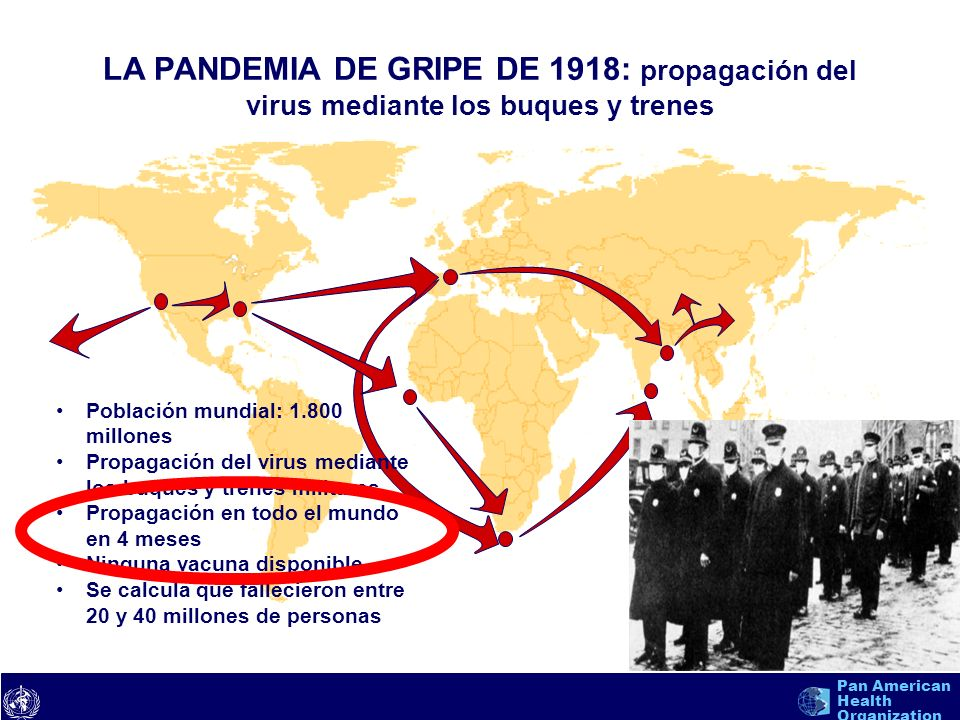 text 10 Pan American Health Organization Fases de la pandemia de la OMS Período interpandémicos – Fase 1.