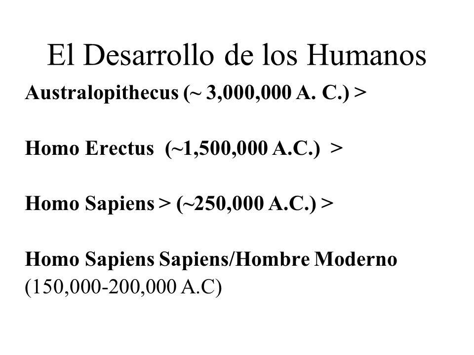 Características de Homo Sapiens Cerebros cada vez más grande Más inteligentes/ capacidad intelectual superior Creando/Usando Herramientas más avanzadas y finas Usando pieles como vestimenta Hacian Herramientas para fabricar otras