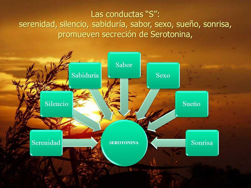Las conductas S: serenidad, silencio, sabiduría, sabor, sexo, sueño, sonrisa, promueven secreción de Serotonina, SEROTONINA SerenidadSilencioSabiduríaSaborSexoSueñoSonrisa