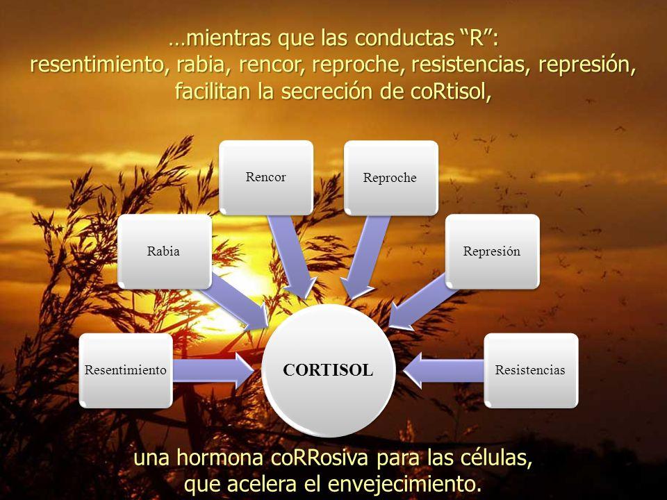 …mientras que las conductas R: resentimiento, rabia, rencor, reproche, resistencias, represión, facilitan la secreción de coRtisol, CORTISOL ResentimientoRabiaRencorReprocheRepresiónResistencias una hormona coRRosiva para las células, que acelera el envejecimiento.