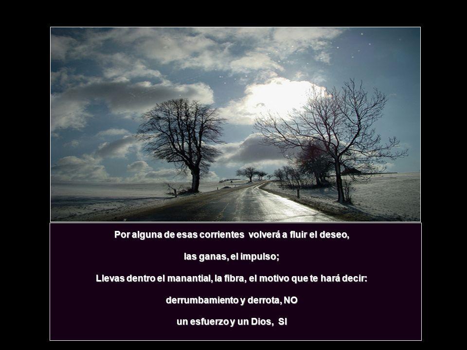 Y mas allá de las fronteras que vives ahora, verás florecer de nuevo tu vida levantarse de nuevo tu árbol levantarse de nuevo tu árbol y agigantarse d