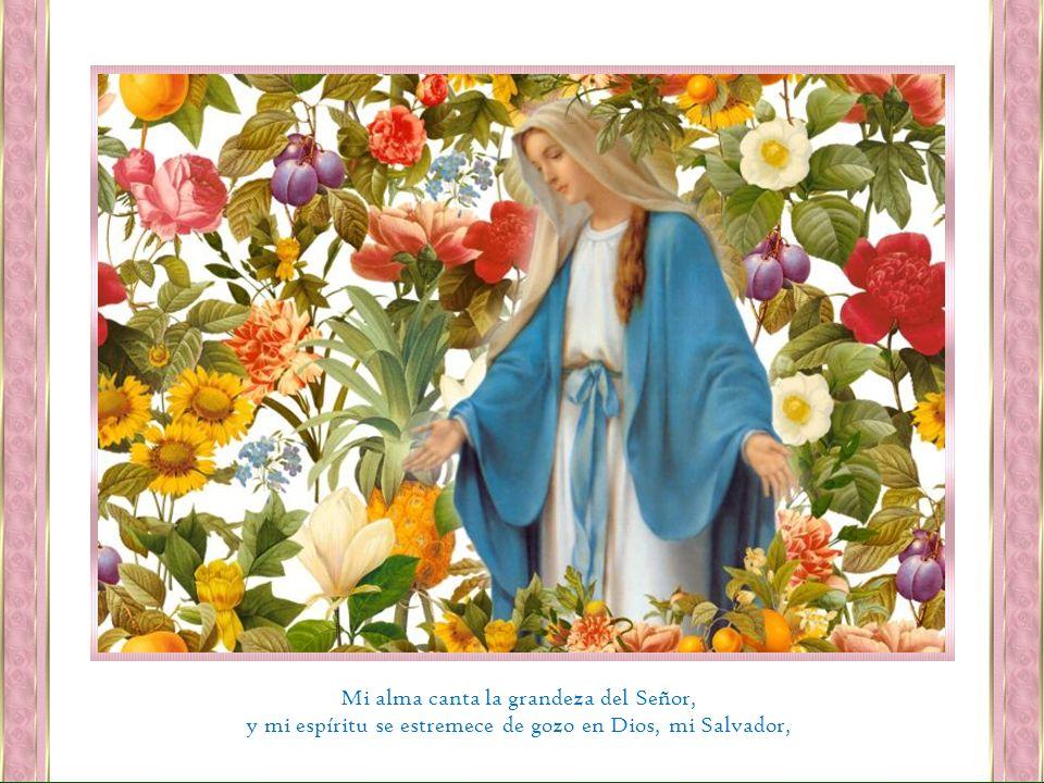 Mi alma canta la grandeza del Señor, y mi espíritu se estremece de gozo en Dios, mi Salvador,