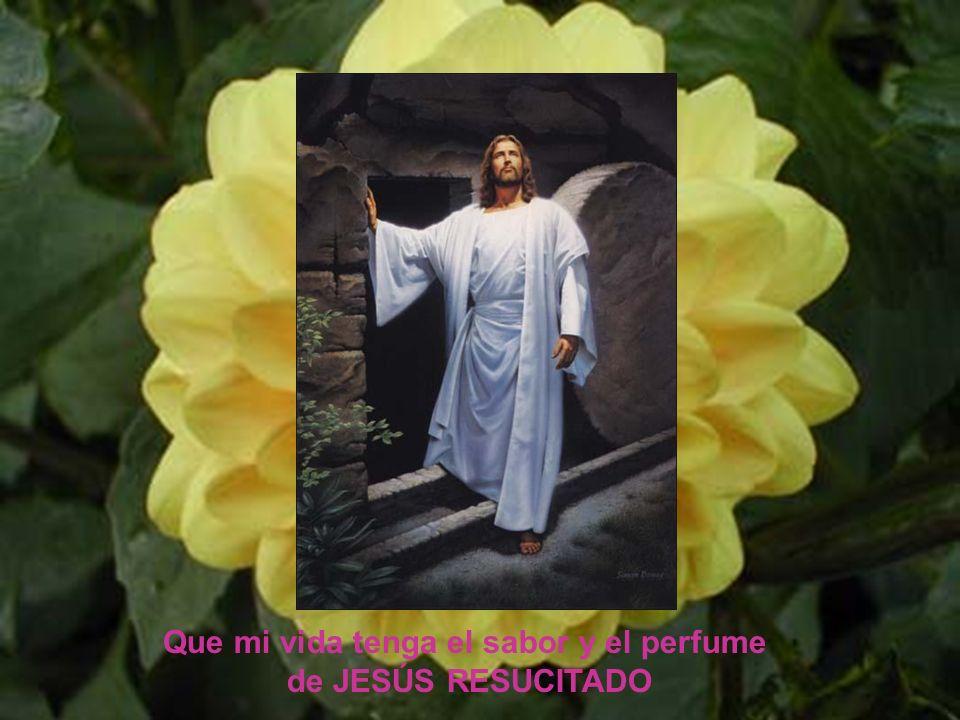 Dios mío, dispón de mí con todo lo que soy y con todo lo que tengo. Dios mío, dispón de mí con todo lo que soy y con todo lo que tengo.