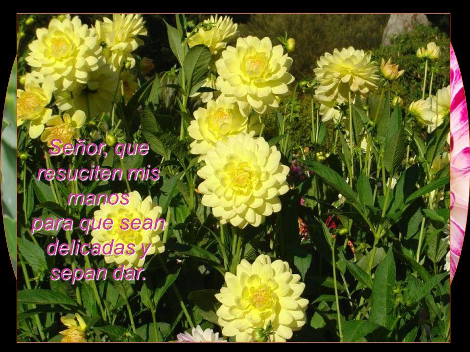 Que mi vida tenga el sabor y el perfume de JESÚS RESUCITADO