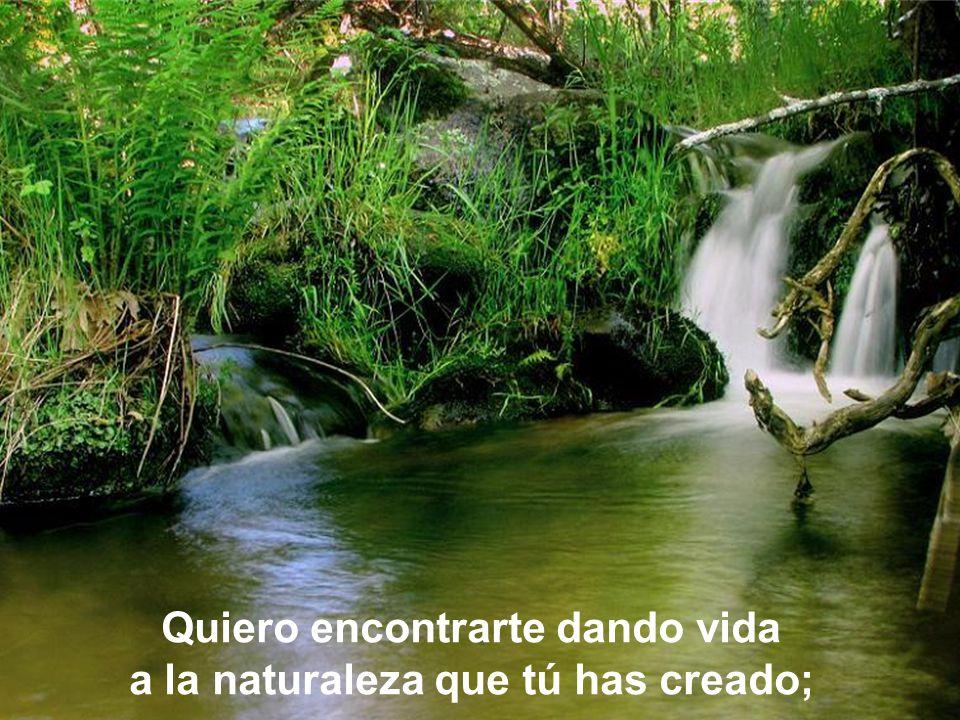 Quiero encontrarte dando vida a la naturaleza que tú has creado;