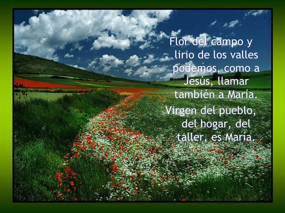 Flor del campo y lirio de los valles podemos, como a Jesús, llamar también a María. Virgen del pueblo, del hogar, del taller, es María. Flor del campo