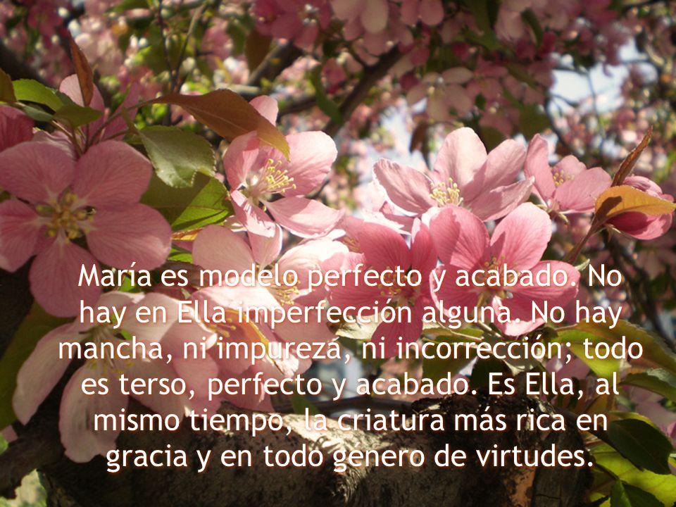 María es modelo perfecto y acabado. No hay en Ella imperfección alguna. No hay mancha, ni impureza, ni incorrección; todo es terso, perfecto y acabado
