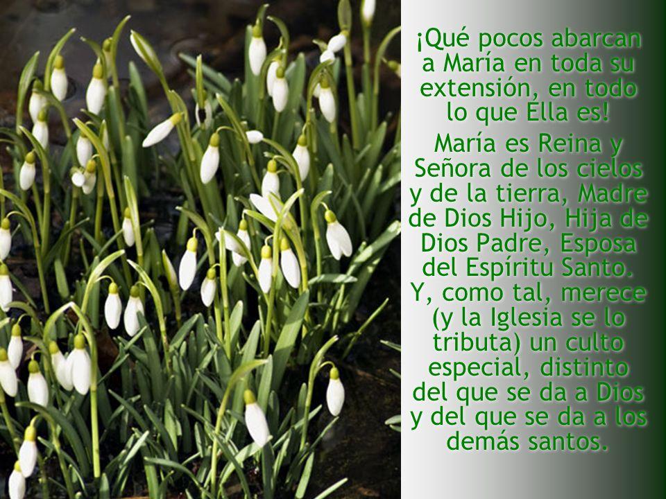 ¡Qué pocos abarcan a María en toda su extensión, en todo lo que Ella es! María es Reina y Señora de los cielos y de la tierra, Madre de Dios Hijo, Hij