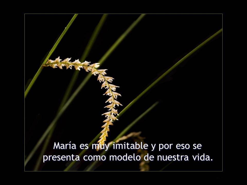 María es muy imitable y por eso se presenta como modelo de nuestra vida. María es muy imitable y por eso se presenta como modelo de nuestra vida.