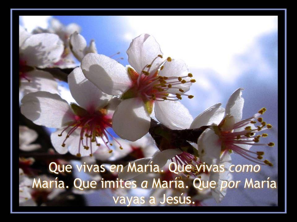 Que vivas en María. Que vivas como María. Que imites a María. Que por María vayas a Jesús. Que vivas en María. Que vivas como María. Que imites a Marí