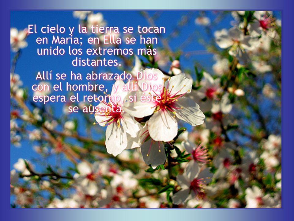 María, la encarnación de la virginidad, prodigio de pureza virginal en su maternidad, árbol cargado de fruto divino sin marchitarse su flor, sus fragancias, sus bellezas, sus glorias…