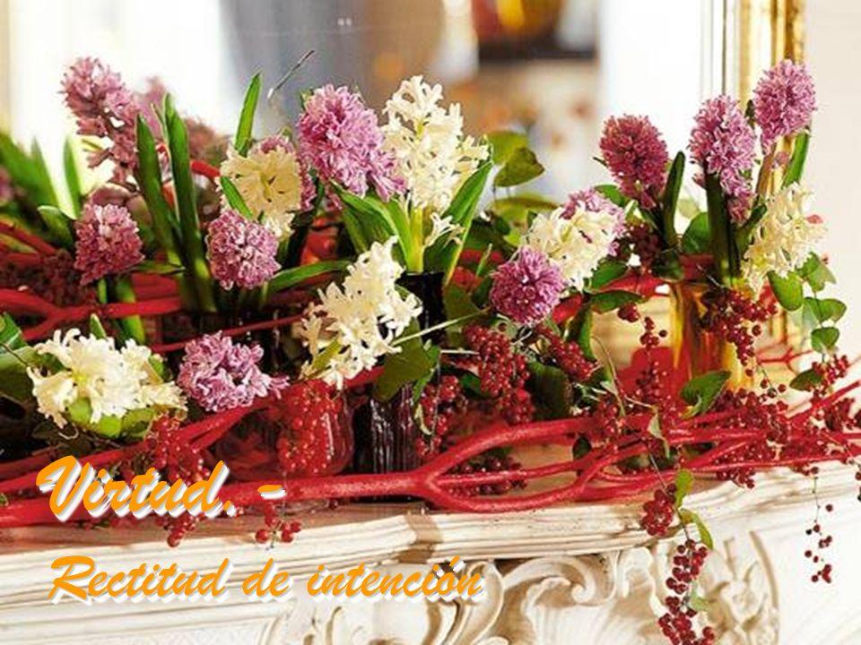 Día 18: Flor.- Jacinto