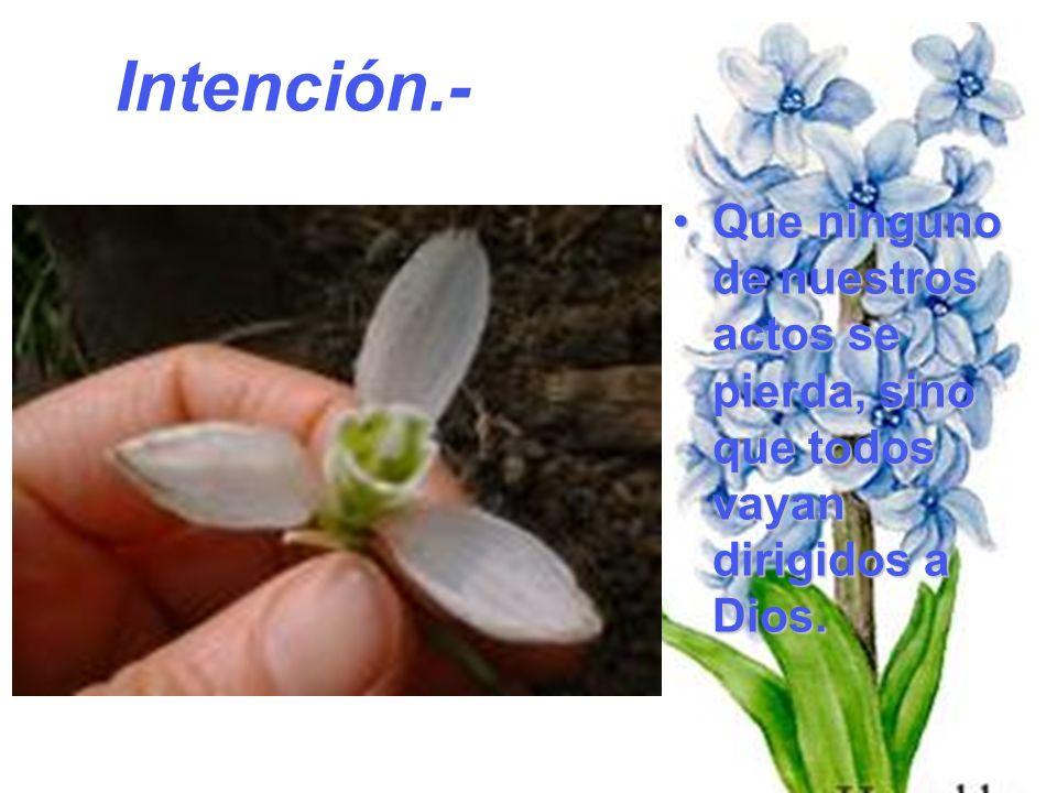 QueQue ninguno de nuestros actos se pierda, sino que todos vayan dirigidos a Dios. Intención.-