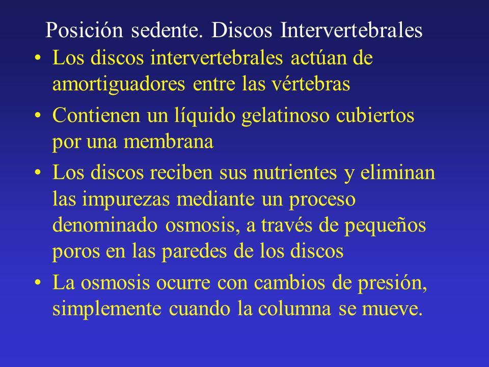 Posición sedente. Discos Intervertebrales Los discos intervertebrales actúan de amortiguadores entre las vértebras Contienen un líquido gelatinoso cub