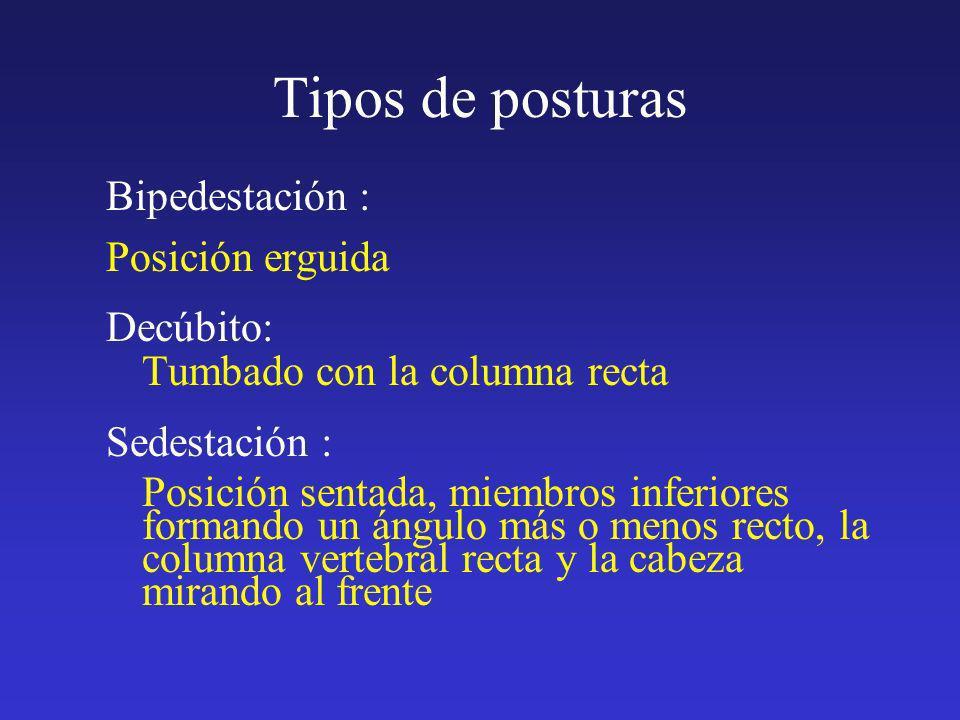 Tipos de posturas Bipedestación : Posición erguida Decúbito: Tumbado con la columna recta Sedestación : Posición sentada, miembros inferiores formando
