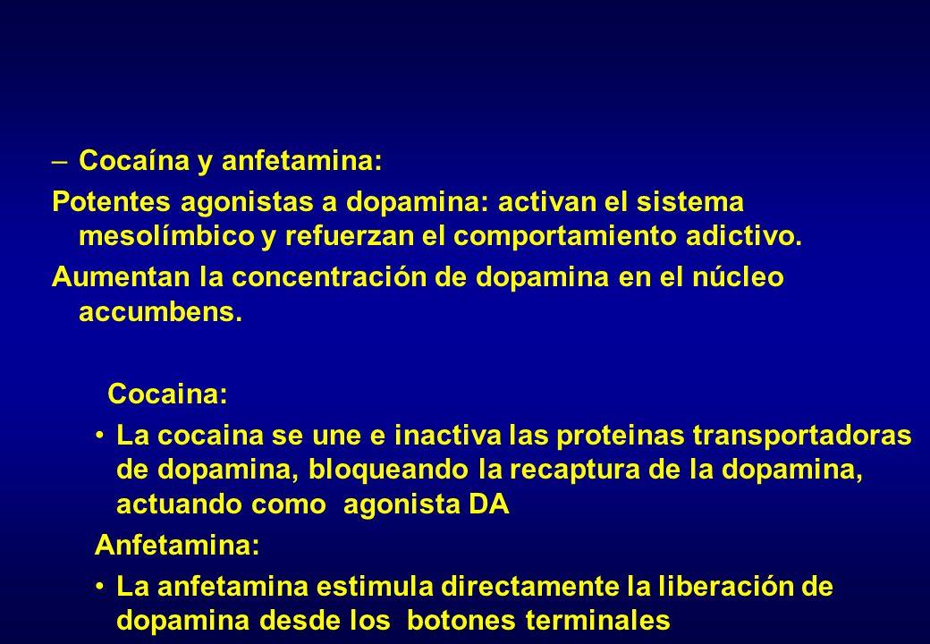 –Cocaína y anfetamina: Potentes agonistas a dopamina: activan el sistema mesolímbico y refuerzan el comportamiento adictivo. Aumentan la concentración
